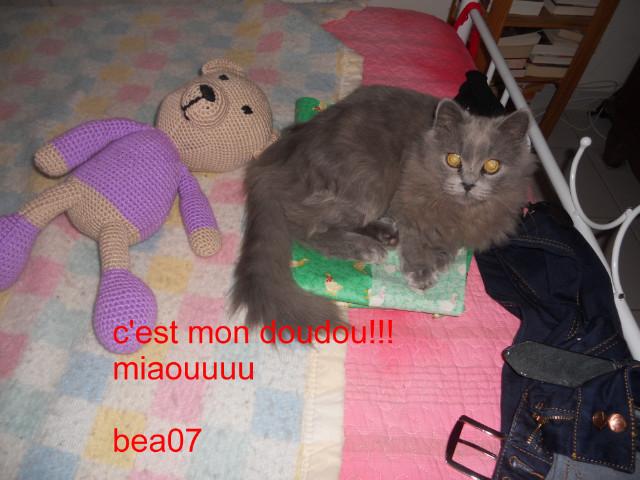 CAL => Ourson Valbeq