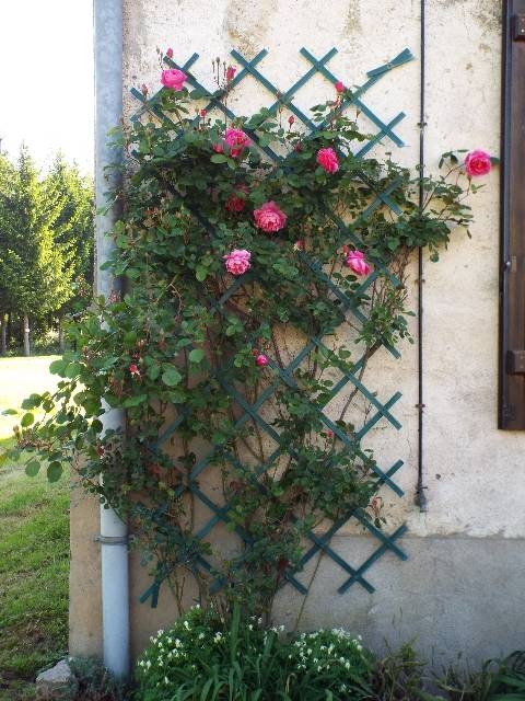 lorraine en fleur 2014 28pbib