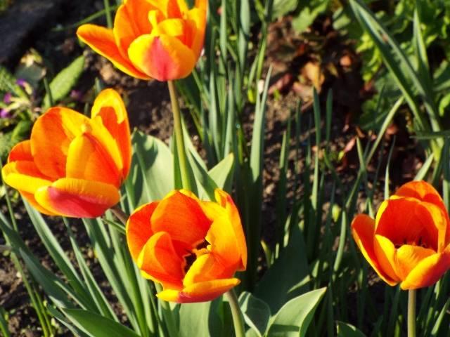 lorraine en fleur 2014 8na11t