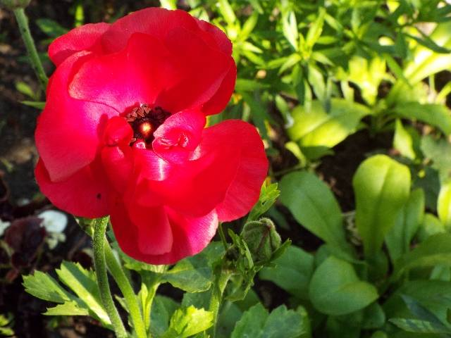 lorraine en fleur 2014 Oyc04h