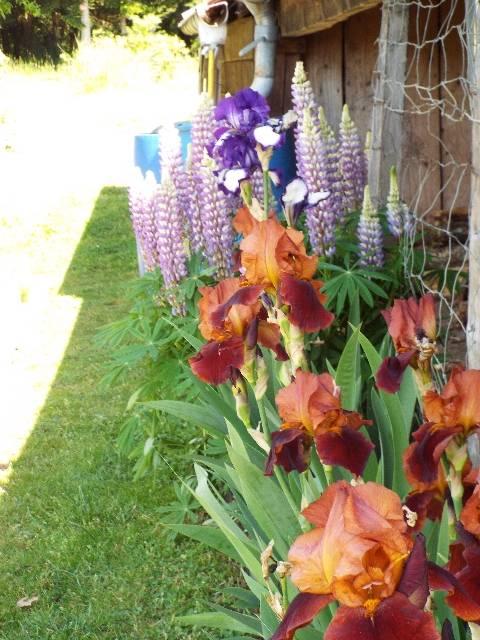 lorraine en fleur 2014 Q2p63x
