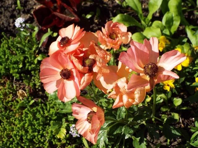 lorraine en fleur 2014 Rx18ac