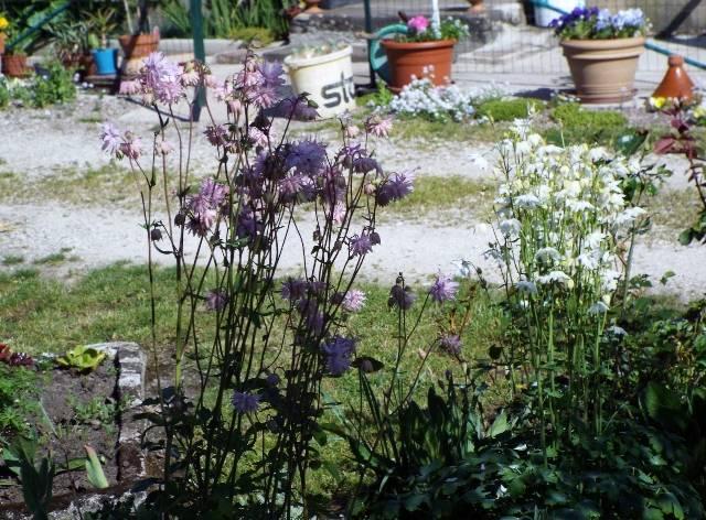 lorraine en fleur 2014 U6zdws