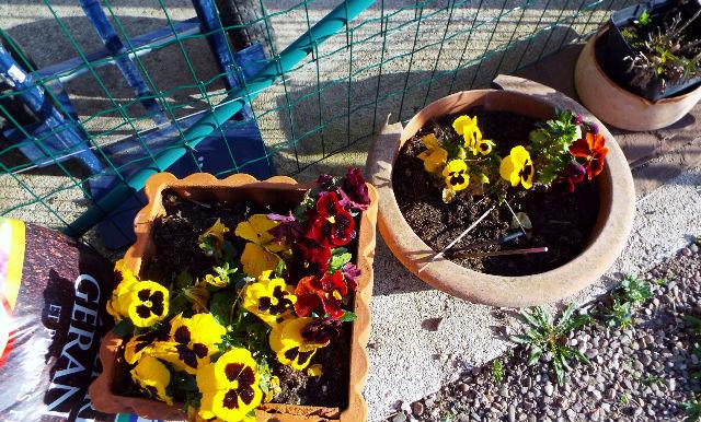 lorraine en fleur 2014 Uyiht1
