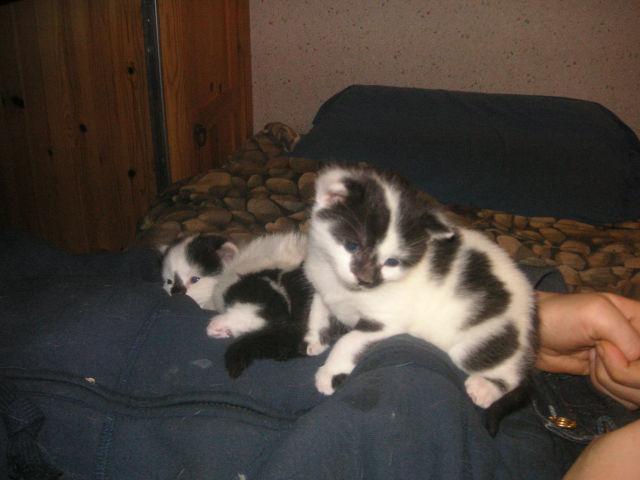 Donne chatons, placés, post à fermer SVP - Page 2 96a7c3