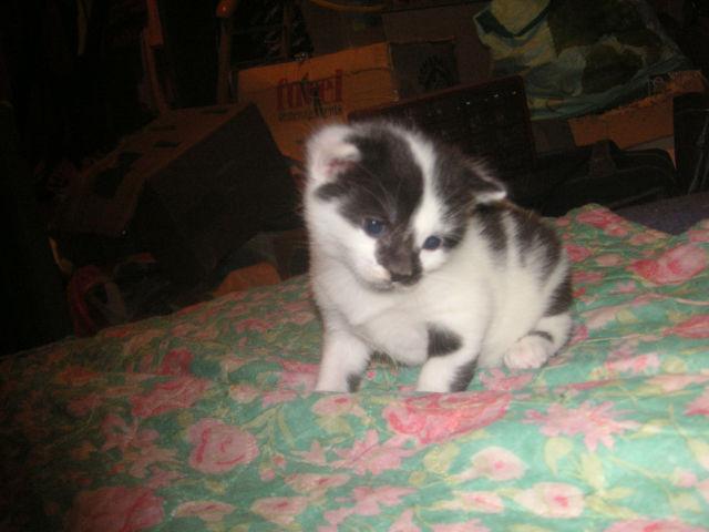 Donne chatons, placés, post à fermer SVP - Page 2 Q4koo5