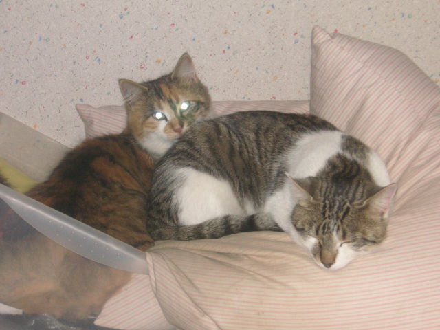 Donne chatons, placés, post à fermer SVP - Page 2 Tmyxlm