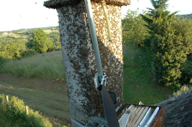 Récupération d'essaim dans une cheminée 8ebqyh