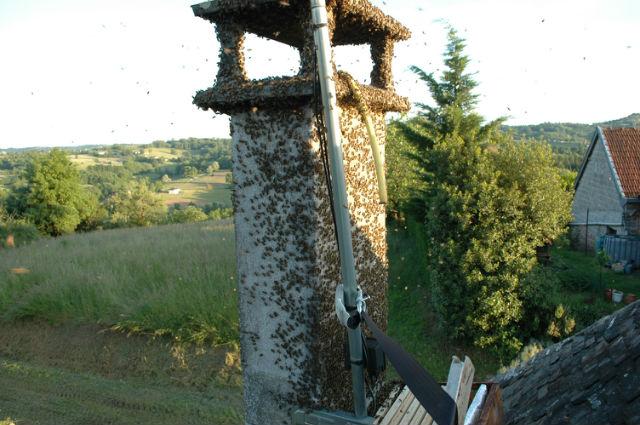 Récupération d'essaim dans une cheminée Tmortj