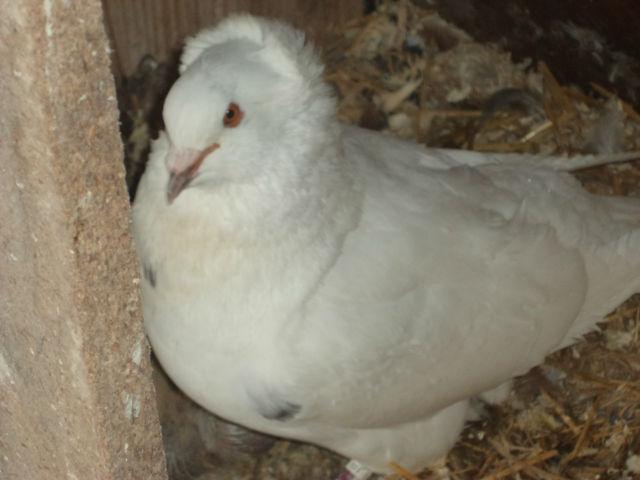 élevage à LEPORCQ Rémi  0e76bb