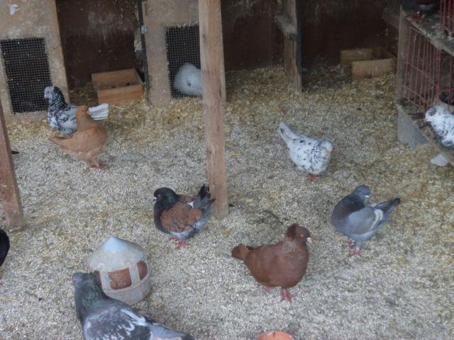 élevage à LEPORCQ Rémi  1dsfe8