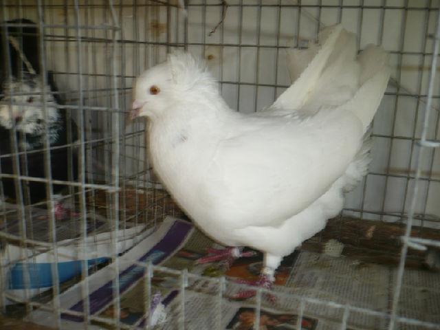 élevage à LEPORCQ Rémi  8r9q75