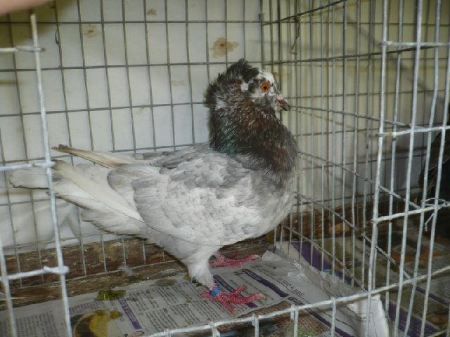 élevage à LEPORCQ Rémi  No7d43